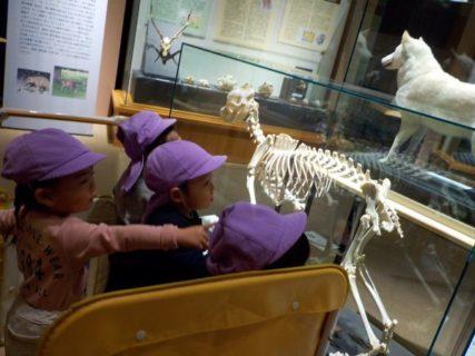 いのちの博物館